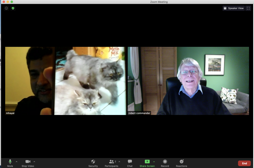 A welcome break in a Zoom meeting - time to compare cats by phone!